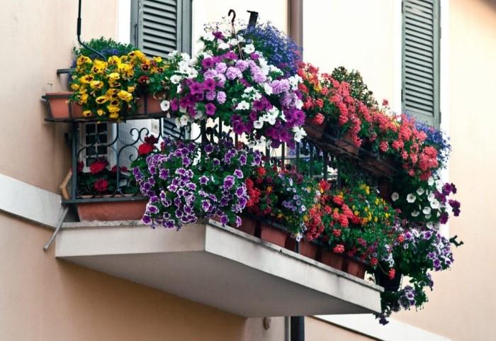 Выращивать цветы за окном сложно, но возможно