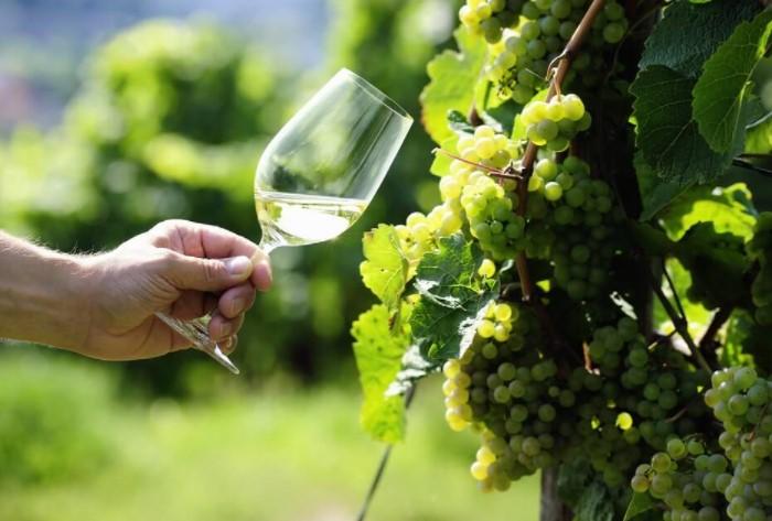 Технология производства не так важна, как виноградный сорт и климатические условия, в которых он рос / Фото: bez-ostanovki.ru