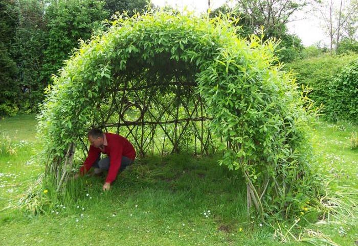 Когда деревца вырастают до нужной высоты, их верхушки связывают, чтобы получился купол / Фото: doski.ru