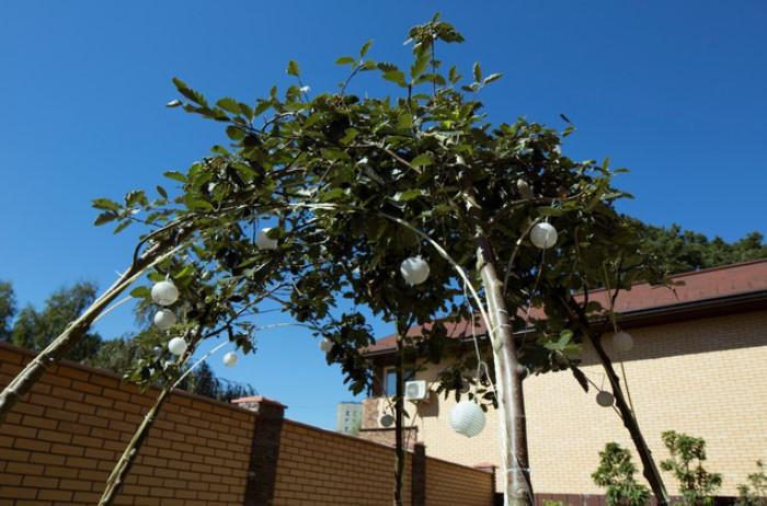 Оформить затененную беседку можно как из свободно растущих деревьев, так и переплетенных между собой / Фото: houzz.ru