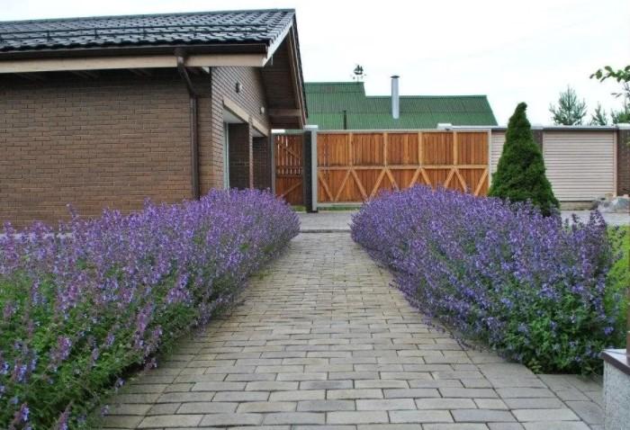 Для изгородей подбираются растения с красивым цветением или нестандартными оттенками листвы / Фото: roomester.ru