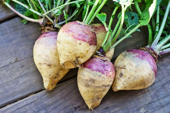 Корнеплод появился благодаря случайному скрещиванию капусты и репы / Фото: farming.org.ua