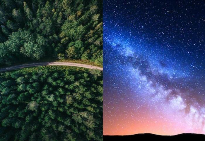 В галактике Млечный путь существует около 400 млрд звезд, а деревьев на Земле - 3 триллиона / Фото: pbs.twimg.com