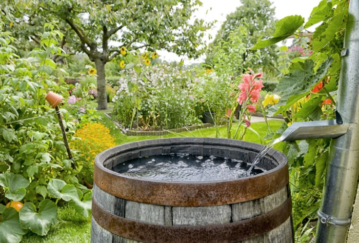 Дождевая вода - не только экотренд, но и необходимость