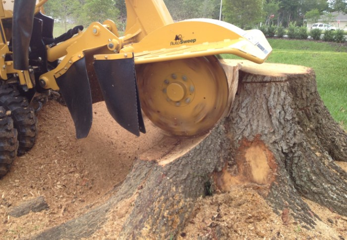 Спецтехника поможет раскрошить остатки пня до состояния опилок, которые затем легко перекопать с землей / Фото: a.mktgcdn.com
