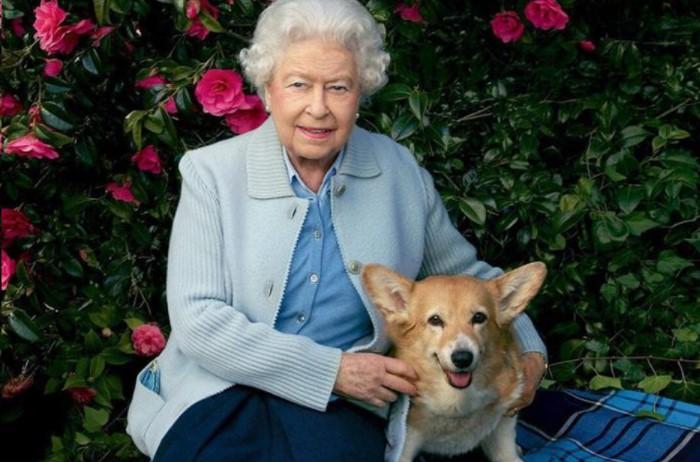 Первую собаку Елизавете подарил отец, Георг VI, на ее восемнадцатилетие / Фото: zimamagazine.com