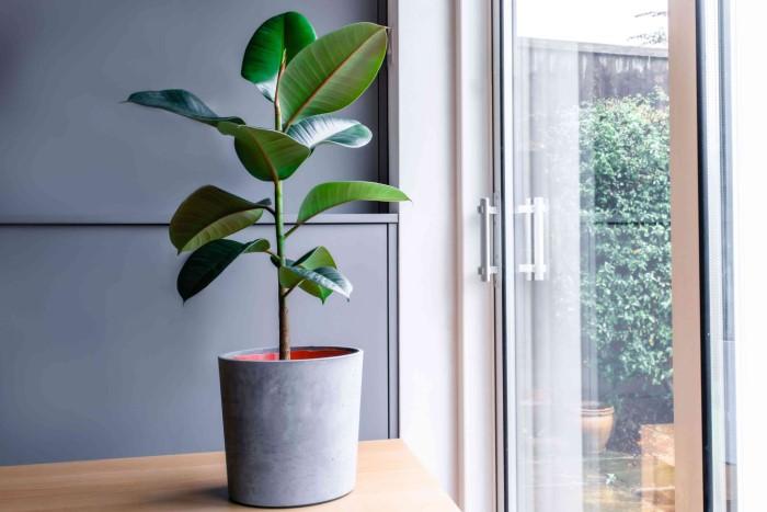 Даже в жару растение стойко выдержит месяц без орошения / Фото: thespruce.com