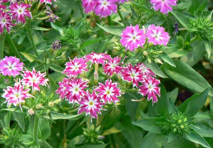 Поливайте рассаду умеренно и удобряйте подкормками с минеральными веществами / Фото: upload.wikimedia.org