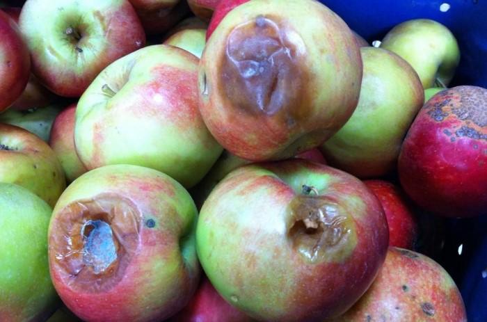 Подгнившие фрукты - одно из любимых лакомств мошек / Фото: pbs.twimg.com