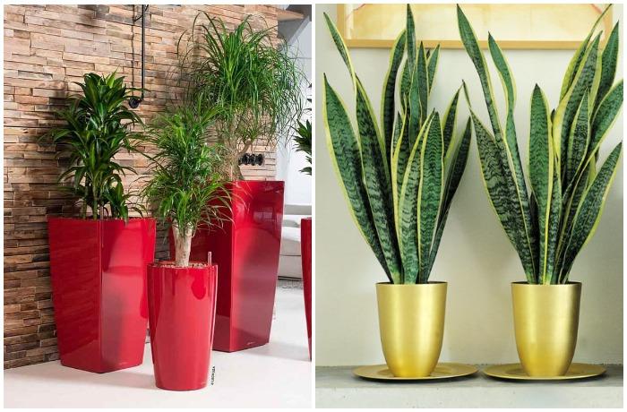 Расставьте на подоконниках и по дому комнатные растения в золотых, зеленых или красных горшках