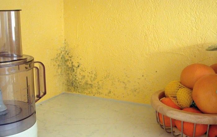 Грибок возникает на неутепленных стенах / Фото: sovremennoedomovodstvo.ru