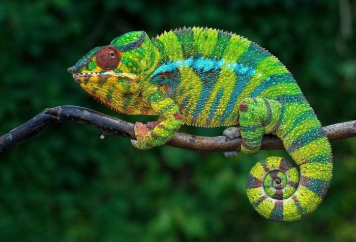 Смена цвета помогает маскироваться, поддерживать определенную температуру тела и общаться с сородичами / Фото: images-na.ssl-images-amazon.com