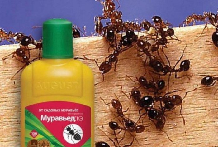 В запущенный случаях воспользуйтесь химическими препаратами / Фото: stopklopu.com