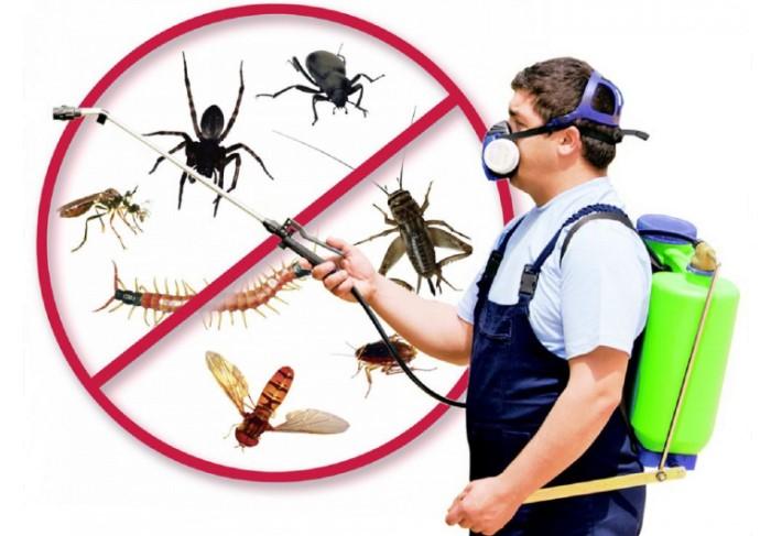 Один из способов избавления от насекомых - создать для них неблагоприятные условия / Фото: anyads.com.au