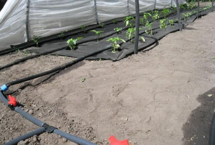 Гибкие ленты подсоединяются к распределительной трубке и в ряд выкладываются по земле / Фото: images.ua.prom.st