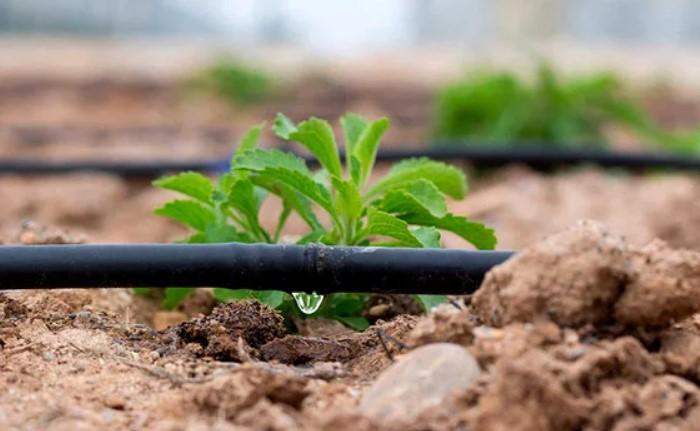 Вода подается к необходимым местам и через капельницы орошает каждое растение / Фото: images.ua.prom.st