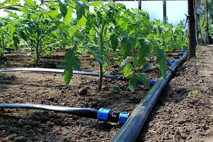 Система подходит для клумб, открытых участков, теплиц, рокариев, живых изгородей и зимних садов