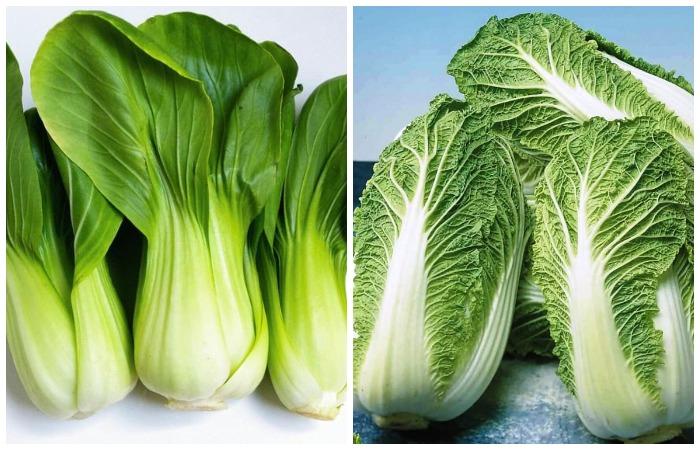 Разница между китайской и пекинской капустой