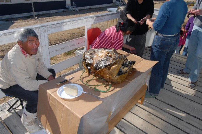 Деликатес представляет собой шкуру тюленя, в которую, как в мешок, набивают разные виды морских птиц / Фото: net.hr
