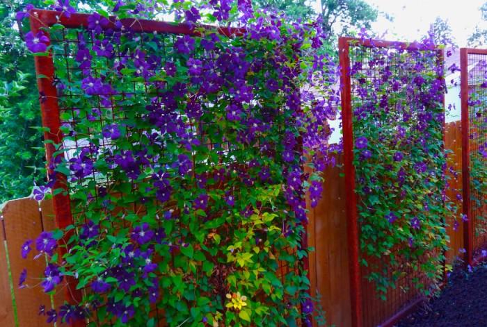 Клематис хорошо растет на солнечной стороне и обильно цветет / Фото: 1ogorod.ru