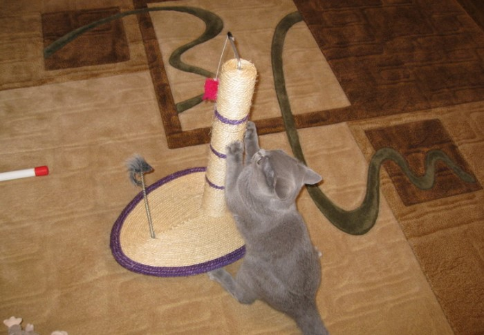 Сделайте из ствола когтеточку: и вам удобно, и коту весело / Фото: sekret-mastera.ru