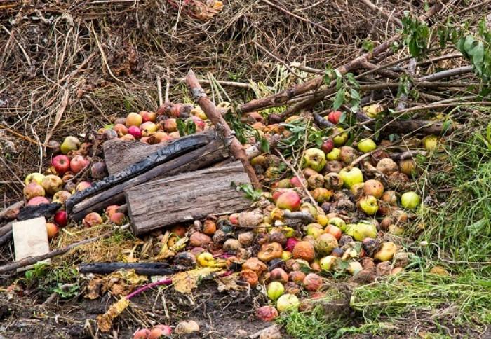 С яблоками получается качественный компост / Фото: yasamicingida.com