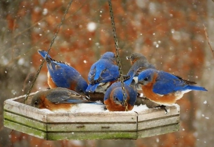 Помогайте птицам в холодное время года и подкармливайте их / Фото: furnishhome.ru