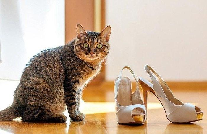 Кроссовки и кеды легко отстирать, а с туфлями, сапогами и ботинками придется повозиться / Фото: lafoy.ru