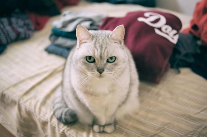 Отстирать одежду и текстильные изделия проще всего / Фото: gafki.ru