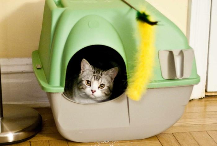 Не забывайте, что кот - ваш лучший друг и заботиться о нем надо соответствующе / Фото: purrpetrators.com