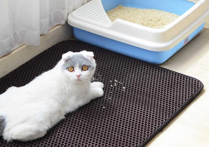 Постелите коврик возле лотка, чтобы кот не разносил наполнитель / Фото: ae01.alicdn.com
