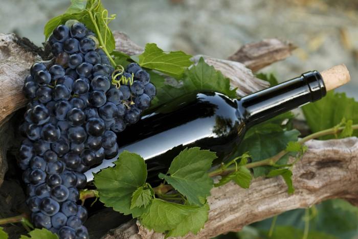 Каберне Совиньон считается одним из благороднейших сортов красных вин / Фото: forumsamogon.ru
