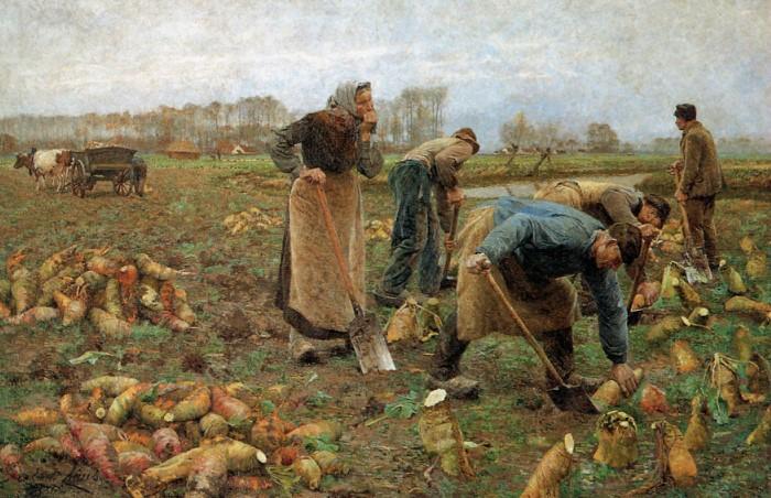 Раньше зимы были намного суровее, поэтому выращивали больше корнеплодов, ведь они хорошо хранятся