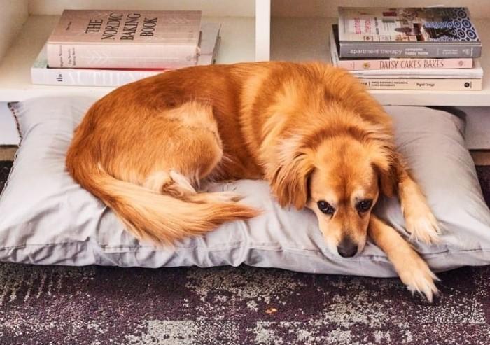 Старая подушка заменит лежанку для кота или собаки. / Фото: furnishhome.ru
