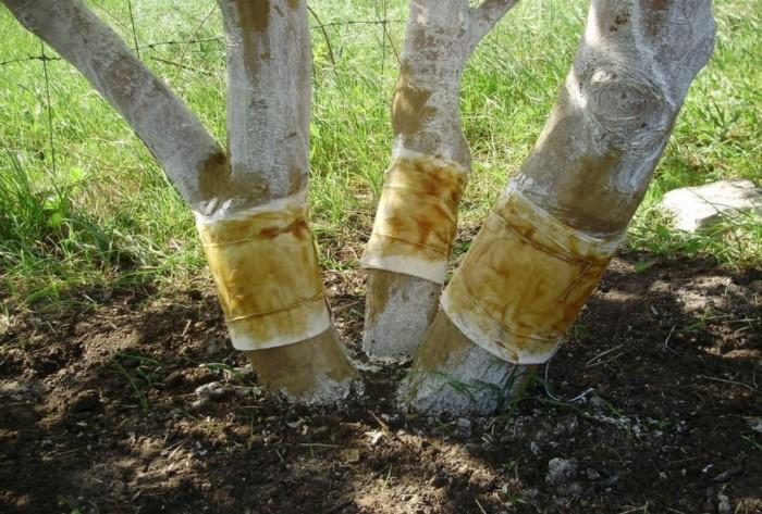 Чаще всего их крепят весной и летом, во время пиковой активности насекомых / Фото: elektro-sadovnik.ru