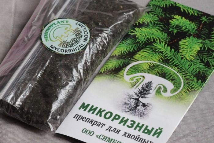 Подберите микоризный препарат под ваш тип растения, и он сделает свое дело / Фото: i.siteapi.org