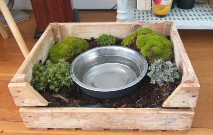 Питомец попьет воды, а заодно и польет растения / Фото: reddit.com
