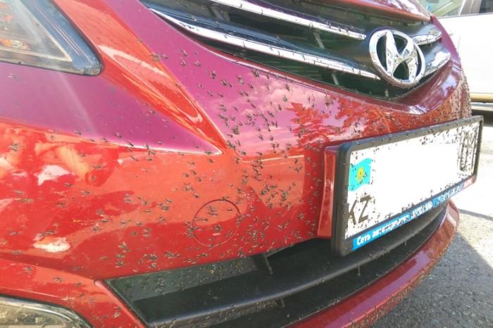 Следы от мошек на кузове / Фото: a.d-cd.net