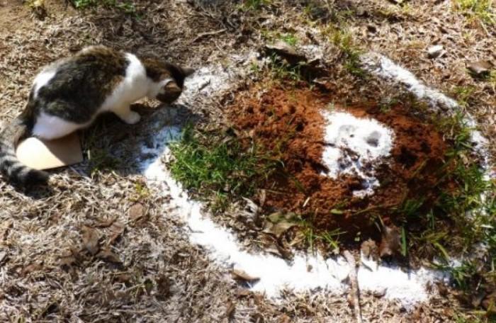 Посыпьте муравейник и место вокруг одним из перечисленных средств  / Фото: tepliepol.ru