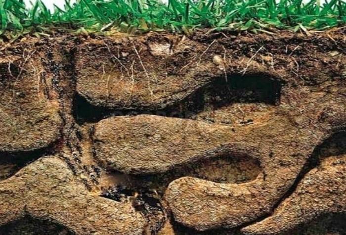 В муравейниках множество разветвленных ходов / Фото: ogorod.ua
