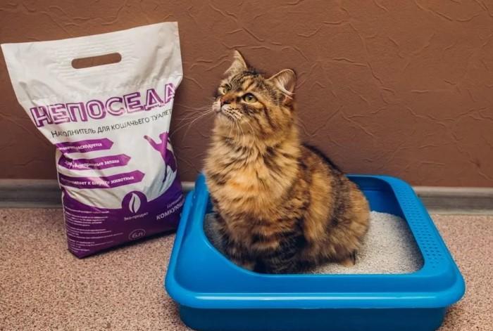 Наполнитель должен устраивать и кота, и хозяина / Фото: vplate.ru