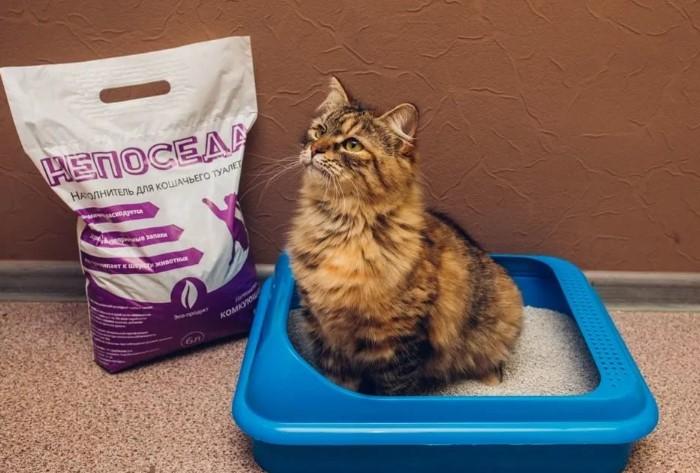 Наполнитель для туалета пригодится и коту, и хозяину