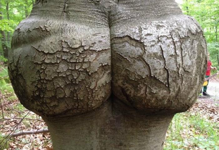 Деревья, холмы или горы приобретают причудливые формы, напоминающие женские прелести / Фото: radikal.ru