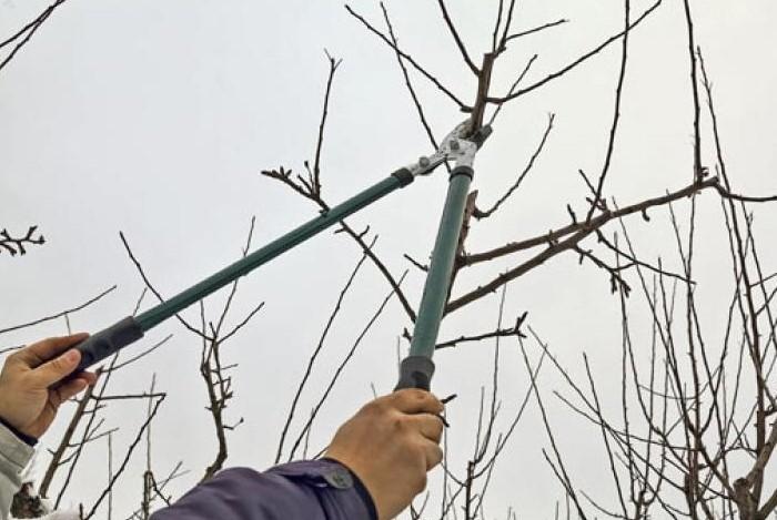 Конец зимы - удачное время, чтобы заняться формированием кроны деревьев / Фото: otomatah.ru