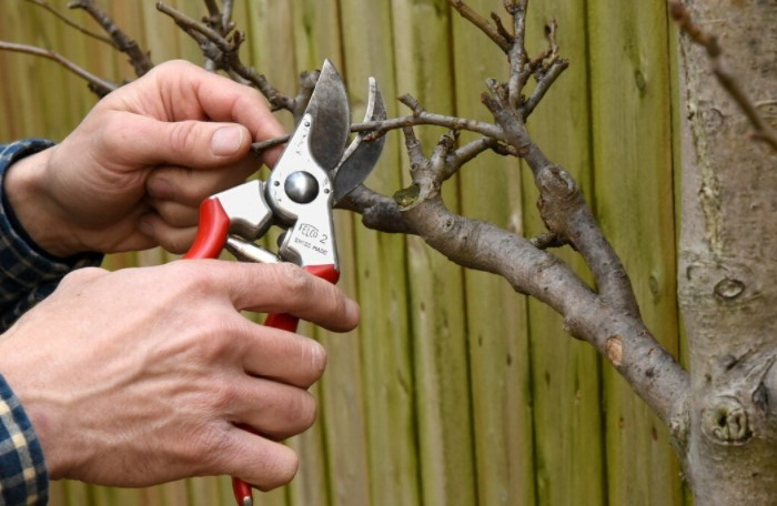 Действовать нужно аккуратно и бережно, чтобы нанести дереву минимальные повреждения