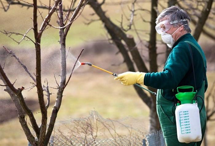 Лучше всего подготавливать деревья вначале или в конце осени.