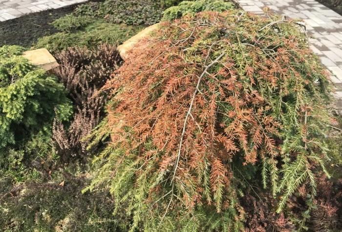 Деревья только проснулись, оттаяли и сразу же начали терять живительные соки из-за заморозков и палящего солнца / Фото: i.pinimg.com