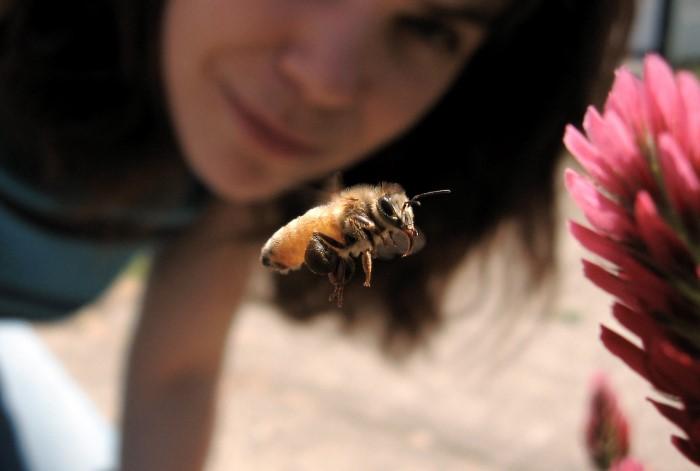 Рядом с насекомым ведите себя спокойно, не паникуйте / Фото: snitsya-son.ru