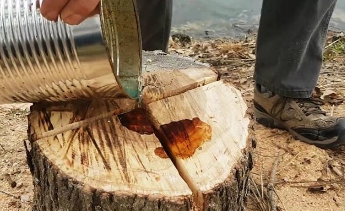 Нужно расчистить вокруг пня 15 см земли, снять с него кору и обильно обработать машинным маслом / Фото: pbs.twimg.com