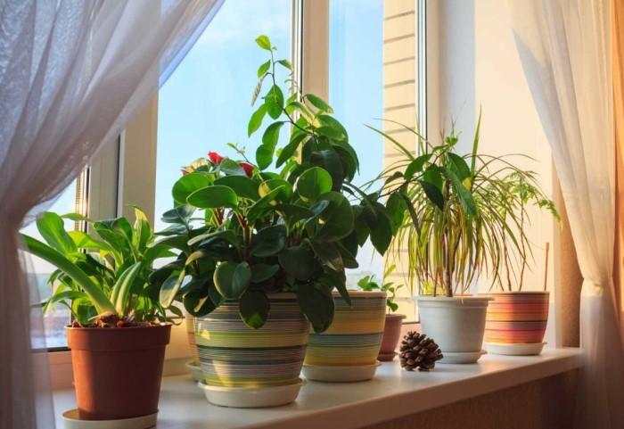 Чем меньше комнатных растений на подоконнике, тем светлее в комнате / Фото: pics.botanichka.ru
